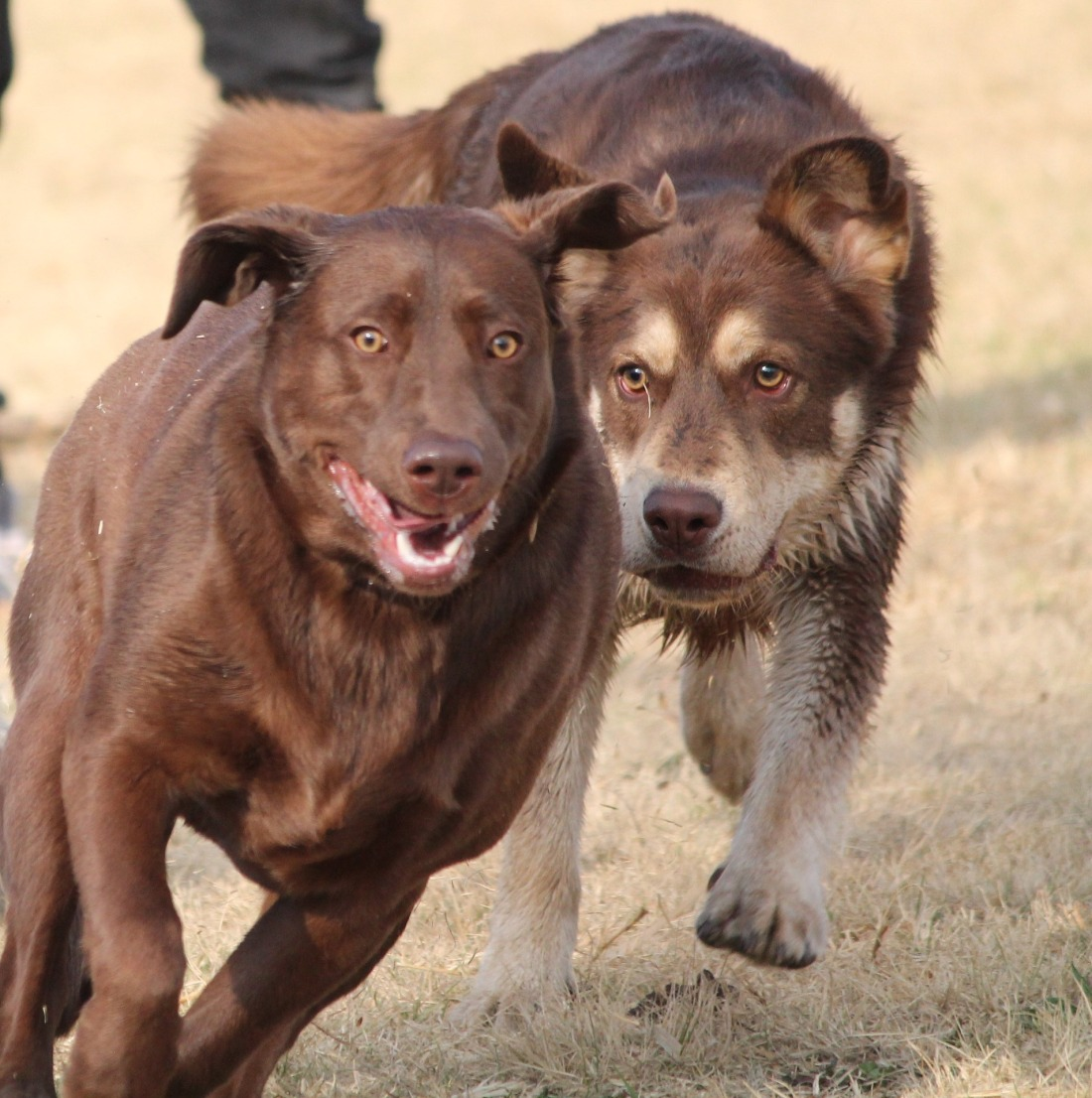 dogs-2690581_1920